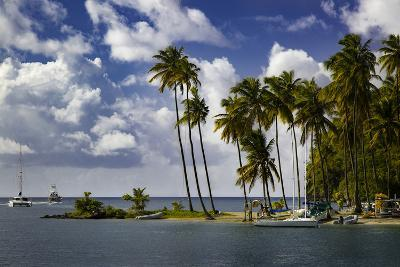 Palm Trees at Entrance to Marigot Bay, St. Lucia, West Indies-Brian Jannsen-Photographic Print