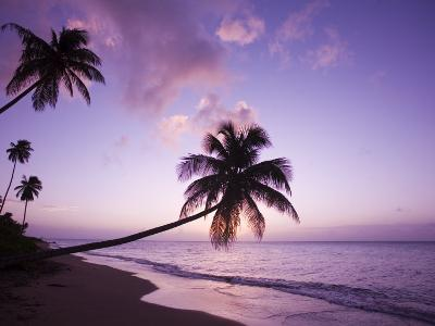Palm Trees at Sunset, Coconut Grove Beach at Cade's Bay, Nevis, Caribbean-Greg Johnston-Photographic Print