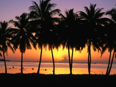 Palm Trees at Sunset, Cook Islands-Peter Hendrie-Photographic Print