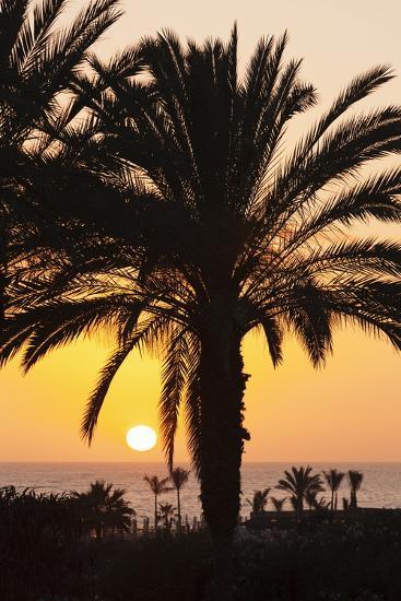 Palm Trees at Sunset, Playa De Los Amadores, Gran Canaria, Canary Islands, Spain, Atlantic, Europe-Markus Lange-Photographic Print