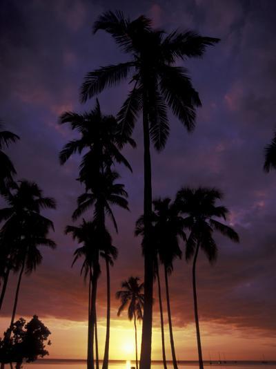 Palm Trees at Sunset, Puerto Rico-Greg Johnston-Photographic Print