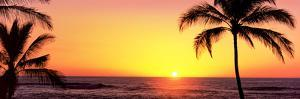 Palm Trees at the Coast at Sunset, Waikoloa, Hawaii County, Hawaii, USA