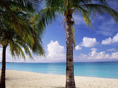 Palm Trees, Beach and Still Turquoise Sea, Seven Mile Beach, Cayman Islands, West Indies-Ruth Tomlinson-Photographic Print