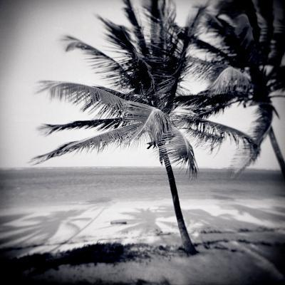 Palm Trees by the Beach at Bweju, Zanzibar, Tanzania, East Africa-Lee Frost-Photographic Print
