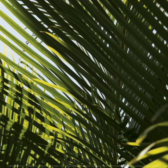 Palm Trees, Dominican Republic, Punta Cana-Lisa S^ Engelbrecht-Art Print