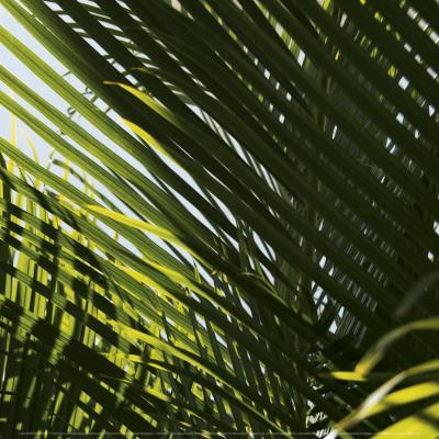 https://imgc.artprintimages.com/img/print/palm-trees-dominican-republic-punta-cana_u-l-f4ehni0.jpg?p=0