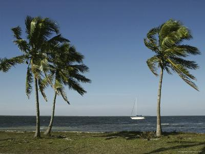 Palm Trees Frame a Lone Sailboat Off the Shore of Florida-Klaus Nigge-Photographic Print