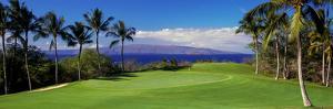 Palm Trees in a Golf Course, Wailea Emerald Course, Maui, Hawaii, Usa