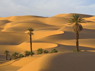 Palm Trees in Desert-Frank Lukasseck-Photographic Print
