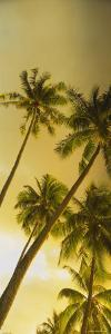 Palm Trees in French Polynesia