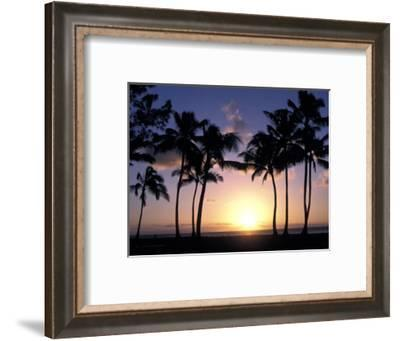 Palm Trees in Silhouette During Sunset on Oahu, Hawaii-Richard Nowitz-Framed Photographic Print