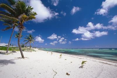 Palm Trees in the Breeze Cayman Islands-George Oze-Photographic Print
