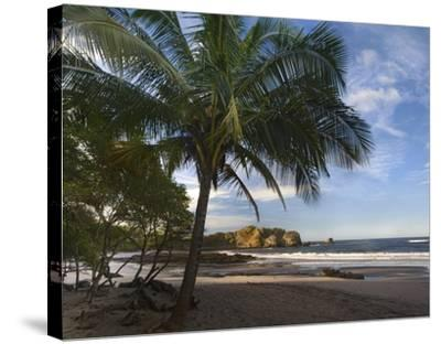 Palm trees line Pelada Beach, Costa Rica-Tim Fitzharris-Stretched Canvas Print