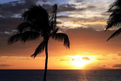 Palm Trees on a Beach At Sunset-Michael Szoenyi-Photographic Print