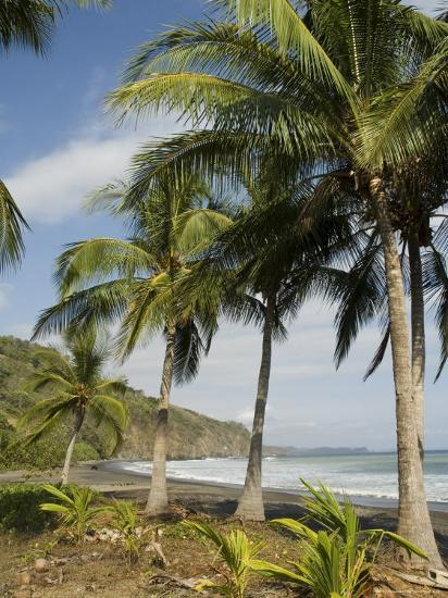 Palm Trees on Beach at Punta Islita, Nicoya Pennisula, Pacific Coast, Costa Rica, Central America-R H Productions-Photographic Print