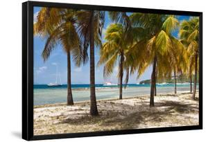 Palm trees on beach, Britannia Bay, Mustique, Saint Vincent And The Grenadines