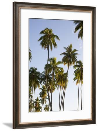 Palm Trees on Moorea Island-Andy Bardon-Framed Photographic Print