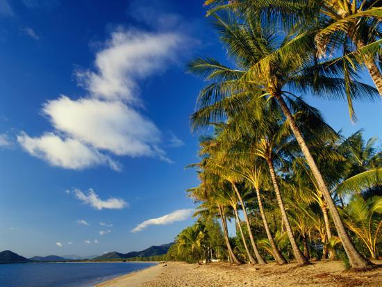 Palm Trees on Palm Cove Beach-Richard l'Anson-Photographic Print