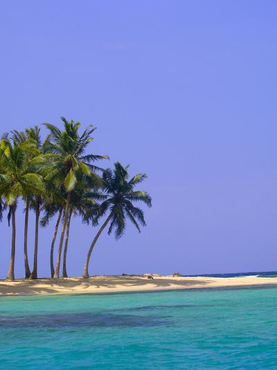 Palm Trees on Pelican Island-Blaine Harrington-Photographic Print