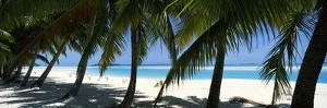 Palm Trees on the Beach, Aitutaki, Cook Islands