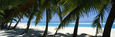 Palm Trees on the Beach, Aitutaki, Cook Islands