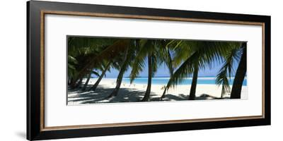 Palm Trees on the Beach, Aitutaki, Cook Islands--Framed Photographic Print