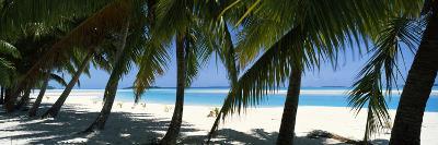 Palm Trees on the Beach, Aitutaki, Cook Islands--Photographic Print