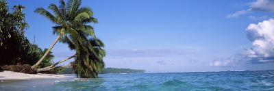 Palm Trees on the Beach, Indonesia--Photographic Print