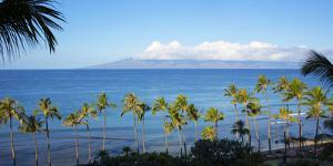 Palm Trees on the Beach, Kaanapali, Maui, Hawaii, Usa