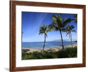 Palm Trees on the Beach, Maui, Hawaii, USA