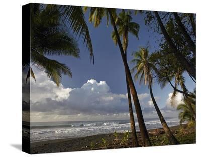 Palm trees on the beach near Marino Ballena National Park, Costa Rica-Tim Fitzharris-Stretched Canvas Print