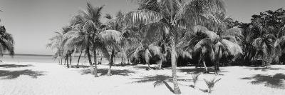 Palm Trees on the Beach, Negril, Jamaica--Photographic Print