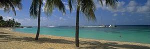 Palm Trees on the Beach, Sainte-Anne Beach, Sainte-Anne, Grande-Terre, Guadeloupe