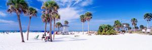 Palm Trees on the Beach, Siesta Key, Gulf of Mexico, Florida, USA
