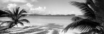 Palm Trees on the Beach, Us Virgin Islands, USA--Photographic Print