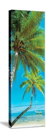 Palm trees on the beach, Viti Levu, Palm Cove, Fiji--Stretched Canvas Print