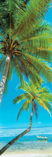 Palm trees on the beach, Viti Levu, Palm Cove, Fiji--Photographic Print