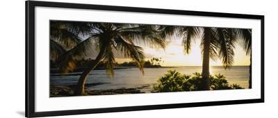 Palm Trees on the Coast, Kohala Coast, Big Island, Hawaii, USA--Framed Photographic Print