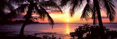 Palm Trees on the Coast, Kohala Coast, Big Island, Hawaii, USA--Photographic Print