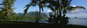 Palm Trees on the Waterfront, Kaneohe Bay, Oahu, Hawaii, USA