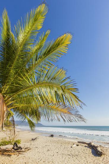 Palm Trees on This Beautiful Surf Beach Near Mal Pais, Santa Teresa, Costa Rica-Rob Francis-Photographic Print