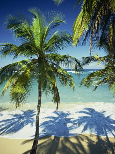 Palm Trees on Tropical Beach, Dominican Republic, West Indies, Caribbean, Central America-Harding Robert-Photographic Print