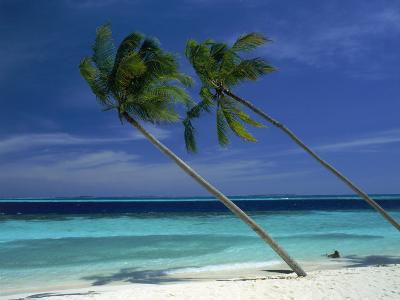 Palm Trees on Tropical Beach, Maldives-Frank Chmura-Photographic Print