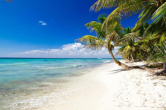 palm-trees-on-tropical-beach