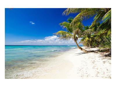 Palm Trees on Tropical Beach--Art Print