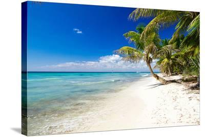 Palm Trees on Tropical Beach--Stretched Canvas Print