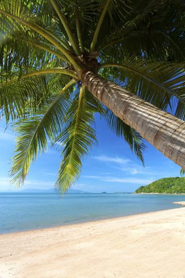 Palm Trees Overhanging Bangrak Beach, Koh Samui, Thailand, Southeast Asia, Asia-Lee Frost-Photographic Print