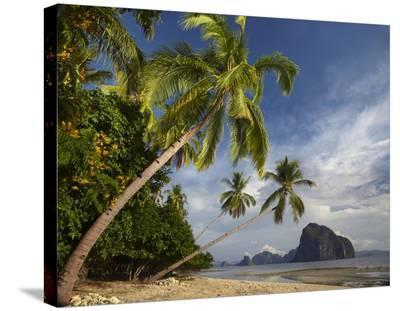 Palm trees, Pinagbuyutan Island, Palawan, Philippines-Tim Fitzharris-Stretched Canvas Print