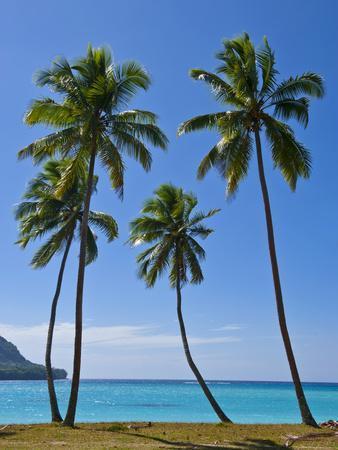 https://imgc.artprintimages.com/img/print/palm-trees-port-orly-island-of-espiritu-santo-vanuatu-south-pacific-pacific_u-l-pxwesh0.jpg?p=0
