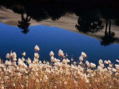 https://imgc.artprintimages.com/img/print/palm-trees-reflected-in-the-oasis-water-sahara-desert_u-l-p5xss10.jpg?p=0